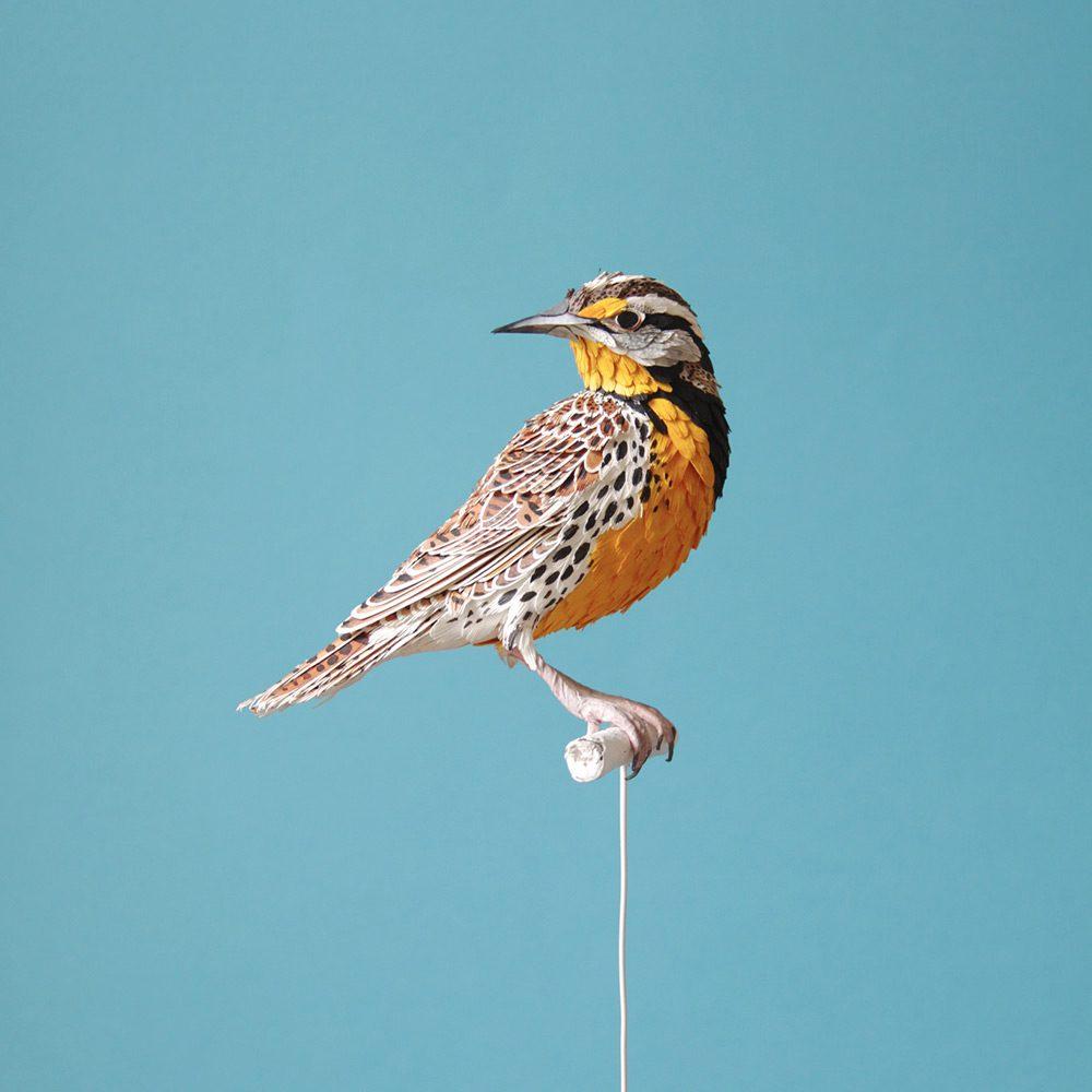 Extraordinary Bird Paper Cut Sculptures By Colombian Artist And Designer Diana Beltran Herrera 4