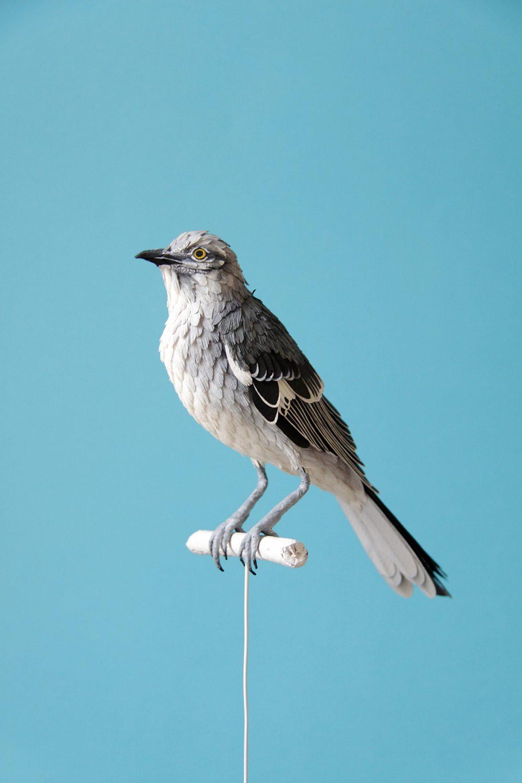 Extraordinary Bird Paper Cut Sculptures By Colombian Artist And Designer Diana Beltran Herrera 5