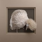Amazingly intricate paper sculptures of animals and natural landscapes by Calvin Nicholls