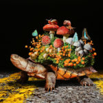 Astonishingly surreal and photo-realistic paintings of fauna and flora by Lisa Ericson