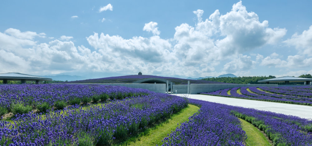 Extraordinary Underground Temple With A Giant Statue Of Buddha Inside By Tadao Ando 10