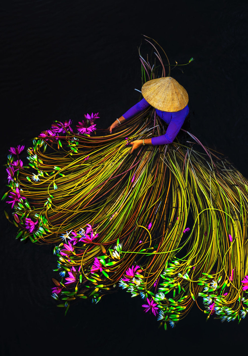 Beautiful Shots Of The Water Lily Harvest In Vietnam Captured By The Lens Of Pham Huy Trung 1