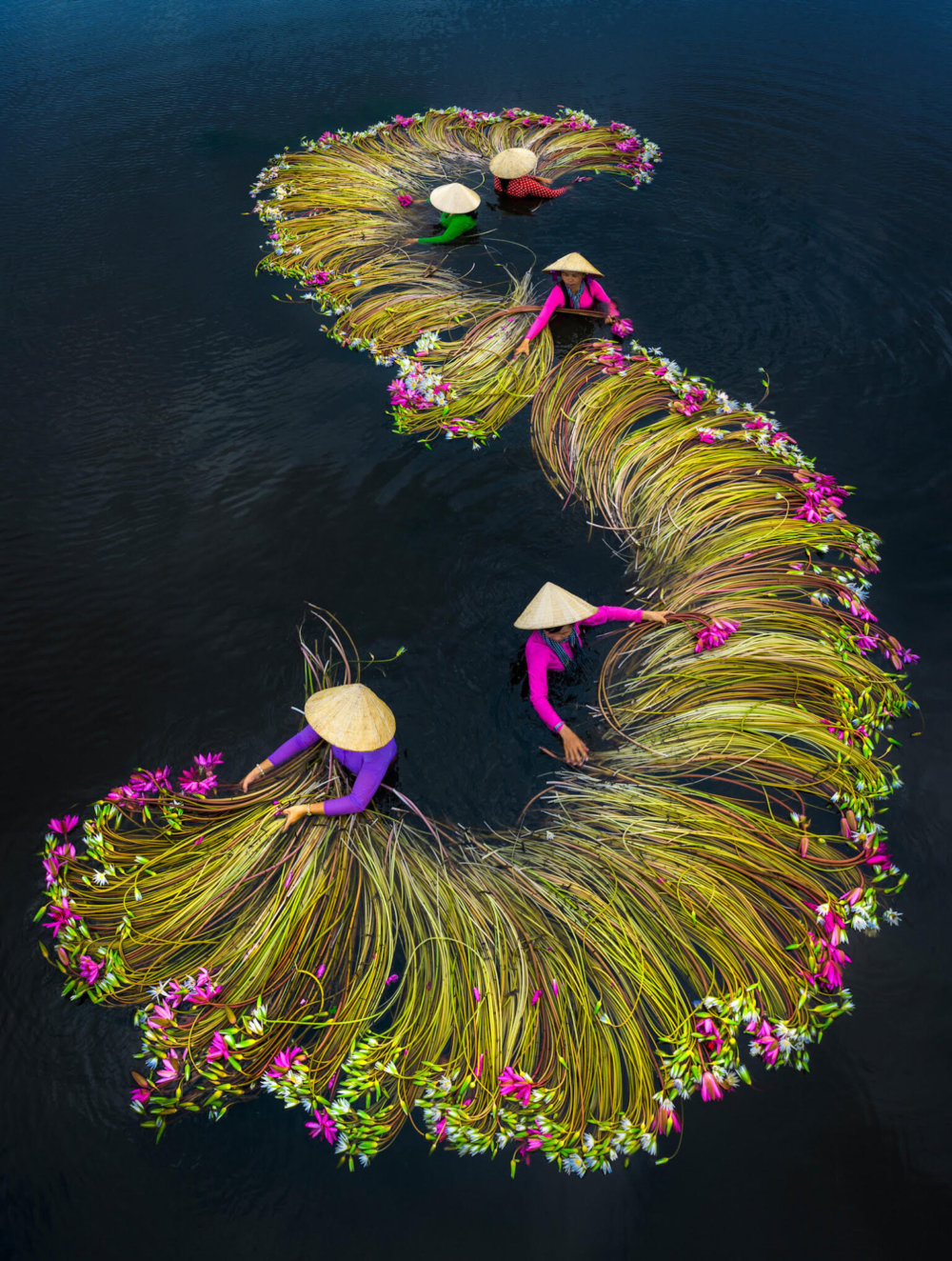 Beautiful Shots Of The Water Lily Harvest In Vietnam Captured By The Lens Of Pham Huy Trung 2