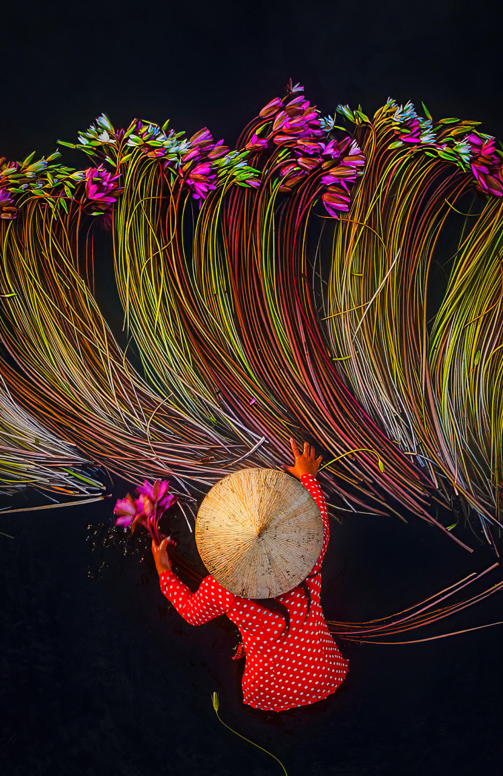 Beautiful Shots Of The Water Lily Harvest In Vietnam Captured By The Lens Of Pham Huy Trung 3