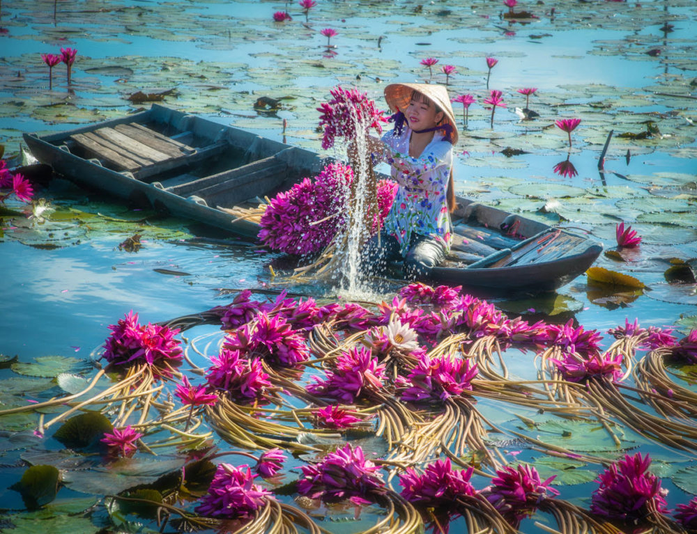 Beautiful Shots Of The Water Lily Harvest In Vietnam Captured By The Lens Of Pham Huy Trung 5