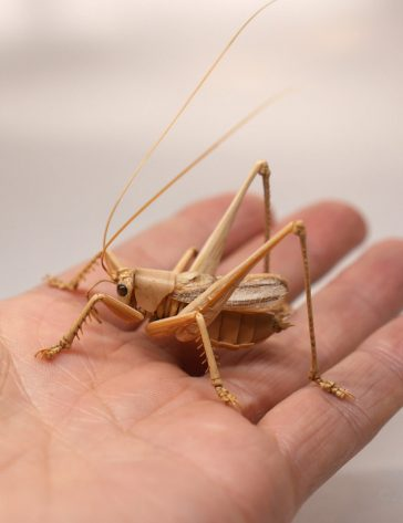 Intricate life-like insect sculptures made from bamboo by Noriyuki Saitoh