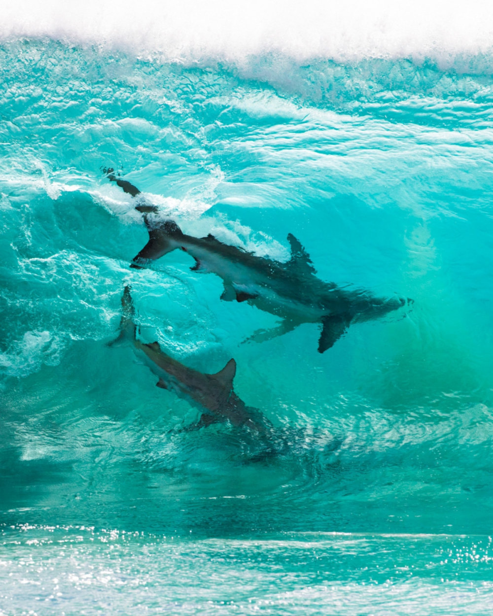 Incredible Photographs Of Sharks Swimming In A Wave Captured By Sean Scott 5