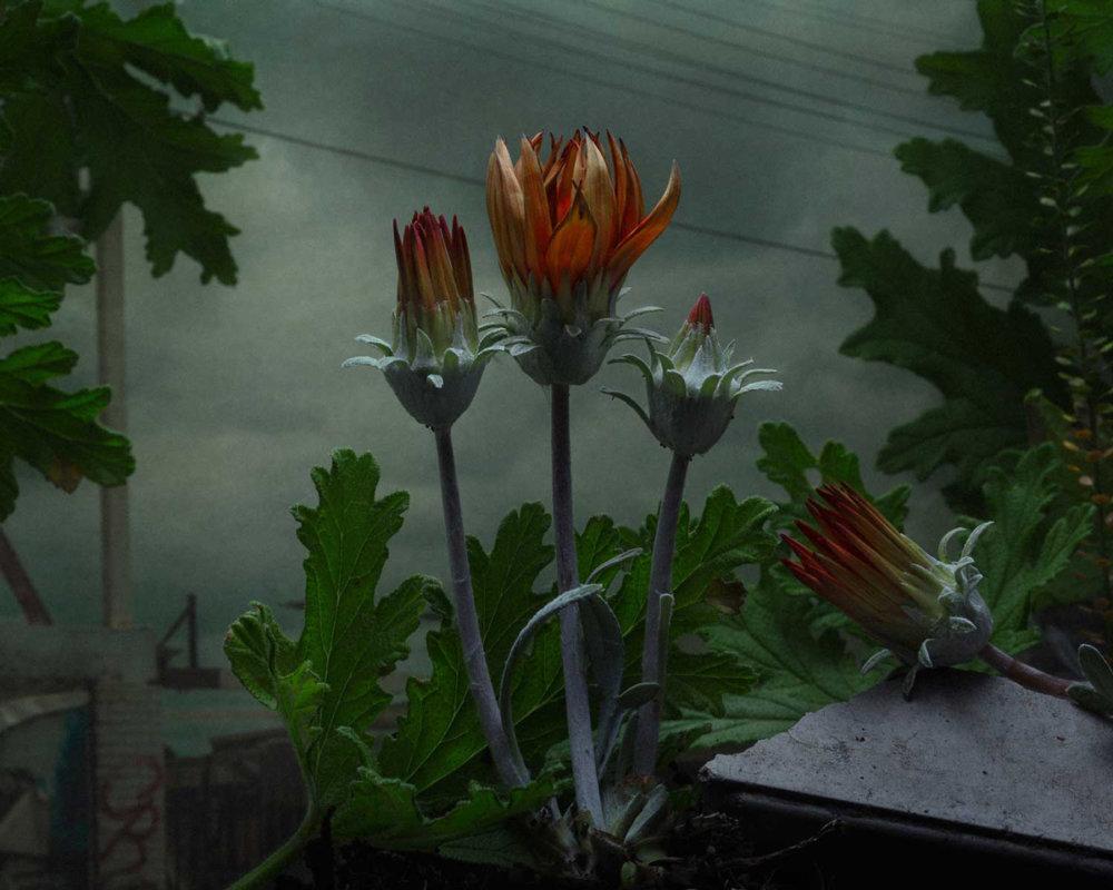 Botanical Inquiry Photographic Series By Daniel Shipp 1