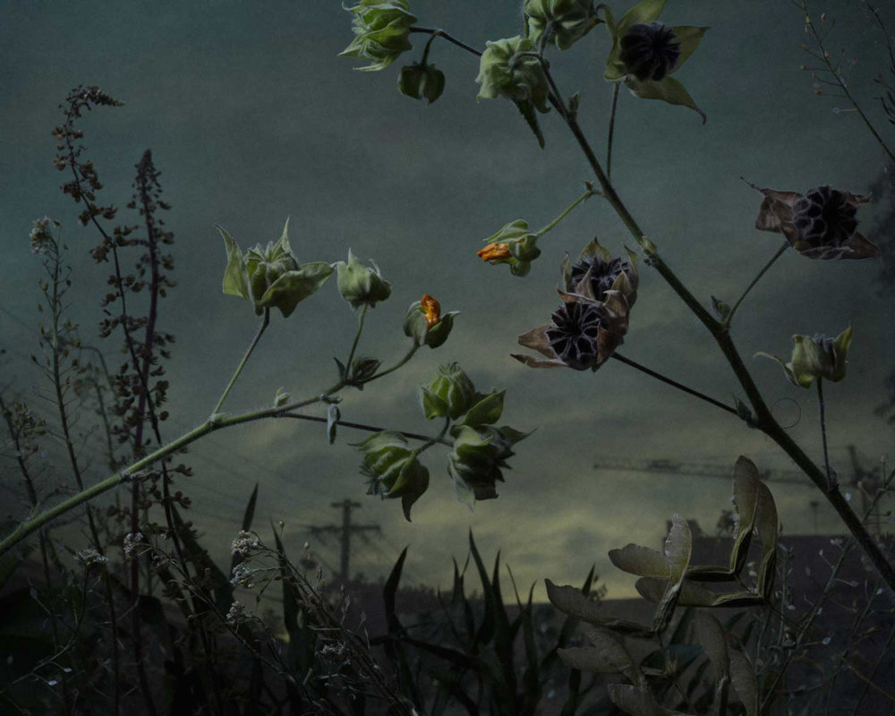 Botanical Inquiry Photographic Series By Daniel Shipp 2