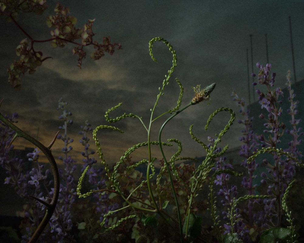 Botanical Inquiry Photographic Series By Daniel Shipp 3