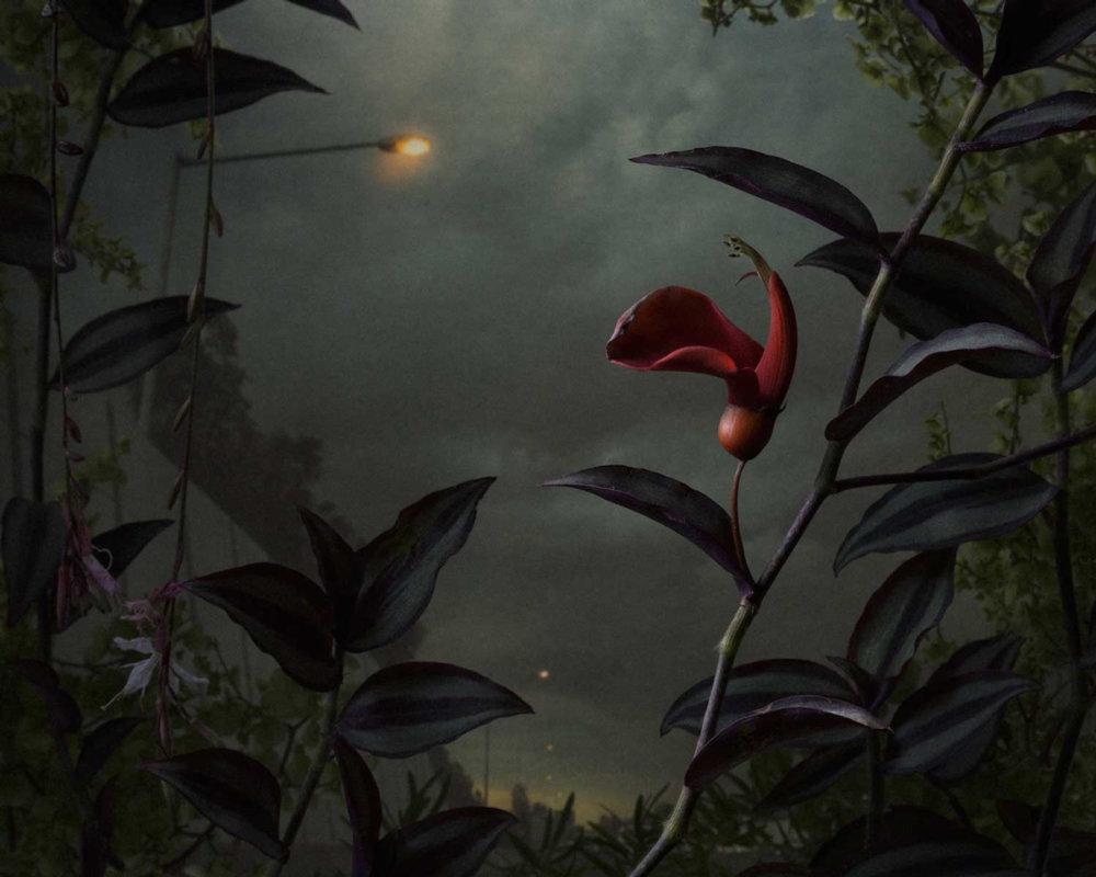 Botanical Inquiry Photographic Series By Daniel Shipp 4