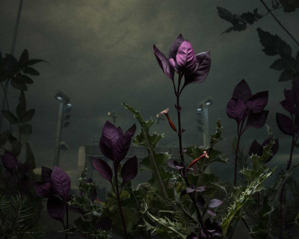 Botanical Inquiry Photographic Series By Daniel Shipp 5
