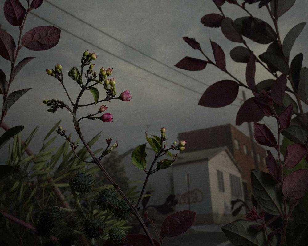 Botanical Inquiry Photographic Series By Daniel Shipp 6