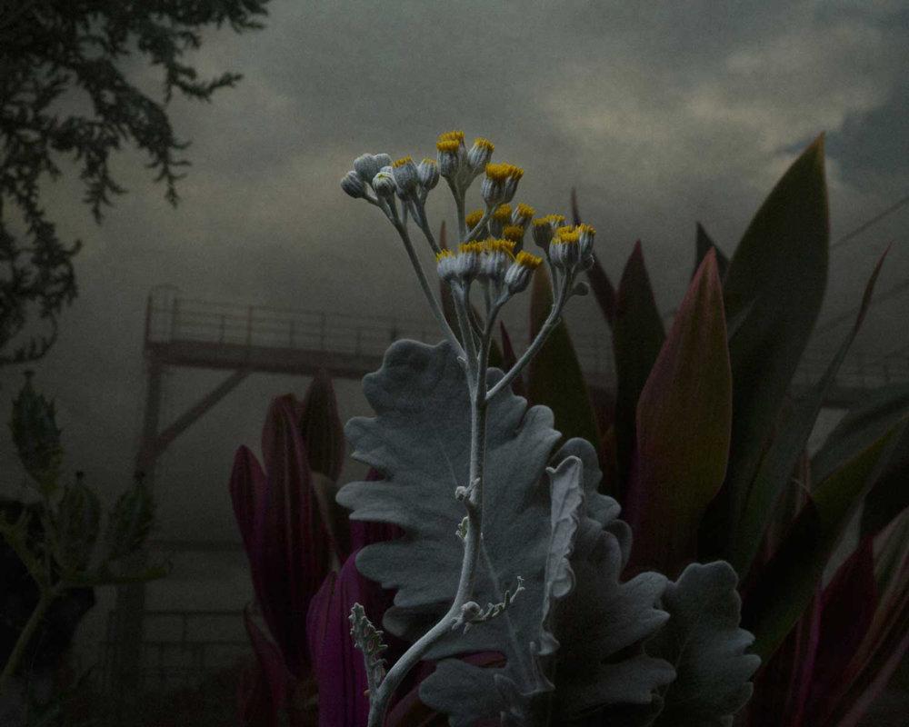 Botanical Inquiry Photographic Series By Daniel Shipp 8