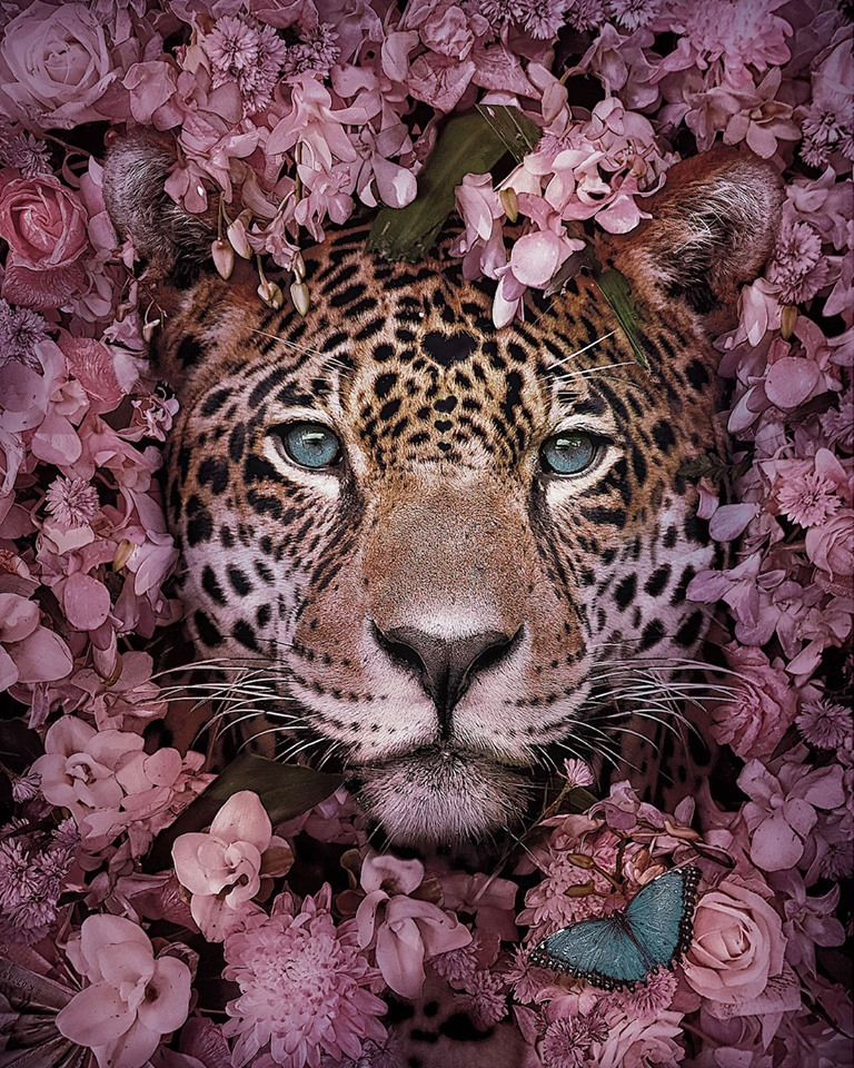 Dreamlike Animal Portraits Enchanting Photo Manipulations By Andreas Haggkvist 1