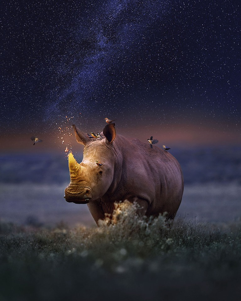 Dreamlike Animal Portraits Enchanting Photo Manipulations By Andreas Haggkvist 2