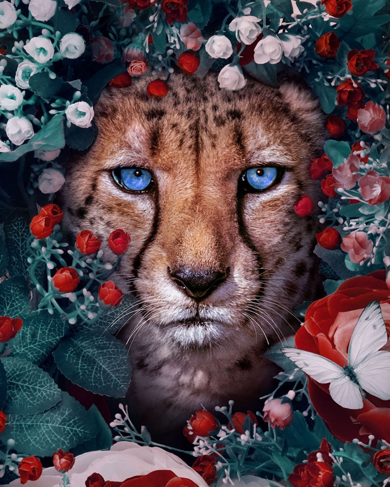 Dreamlike Animal Portraits Enchanting Photo Manipulations By Andreas Haggkvist 4