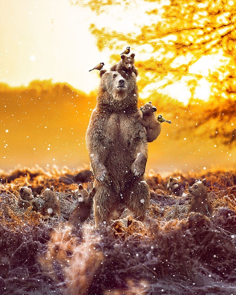 Dreamlike Animal Portraits Enchanting Photo Manipulations By Andreas Haggkvist 8