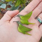 Crotalaria: the incredible plant with flowers that look like hummingbirds