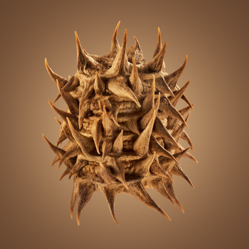 Hitchhikers Thorn And Bur Seeds In Macro Photography By Dillon Marsh 10