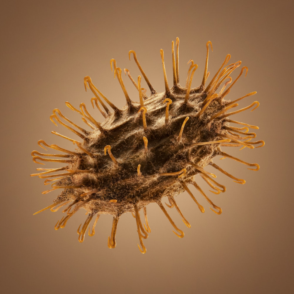 Hitchhikers Thorn And Bur Seeds In Macro Photography By Dillon Marsh 2