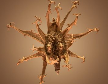 """""""Hitchhikers"""": thorn and bur seeds in macro photography by Dillon Marsh"""