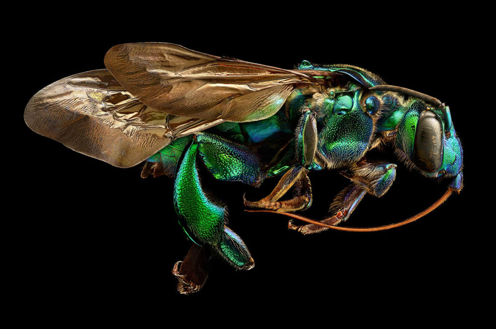 Microsculpture Stunning Macro Photographs Of Colorful Insects By Levon Biss 1