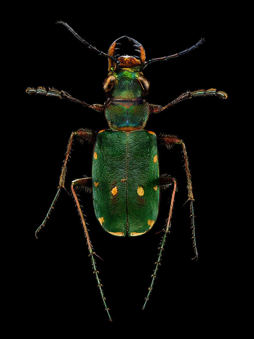 Microsculpture Stunning Macro Photographs Of Colorful Insects By Levon Biss 10