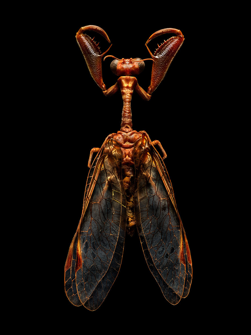 Microsculpture Stunning Macro Photographs Of Colorful Insects By Levon Biss 2