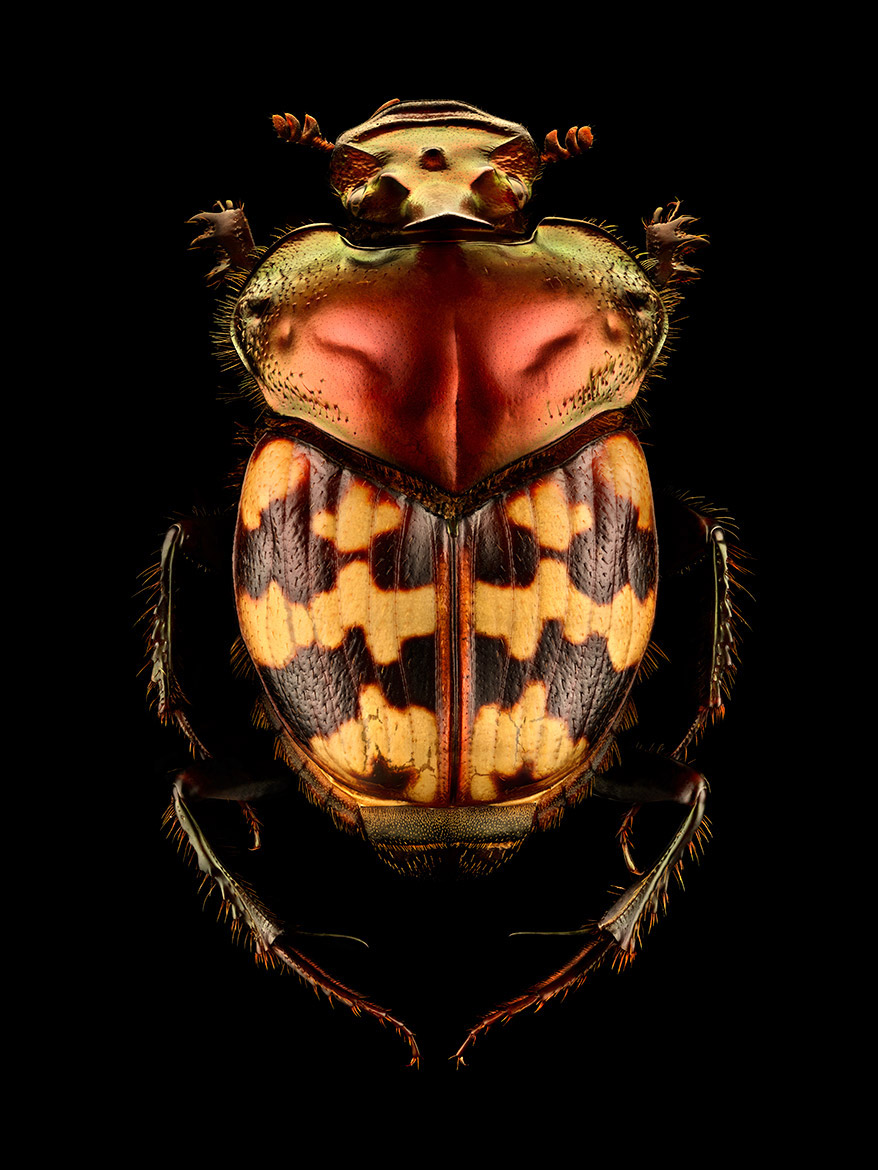 Microsculpture Stunning Macro Photographs Of Colorful Insects By Levon Biss 4