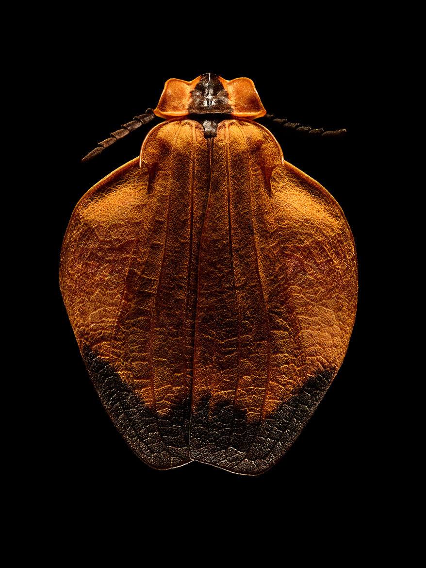 Microsculpture Stunning Macro Photographs Of Colorful Insects By Levon Biss 7