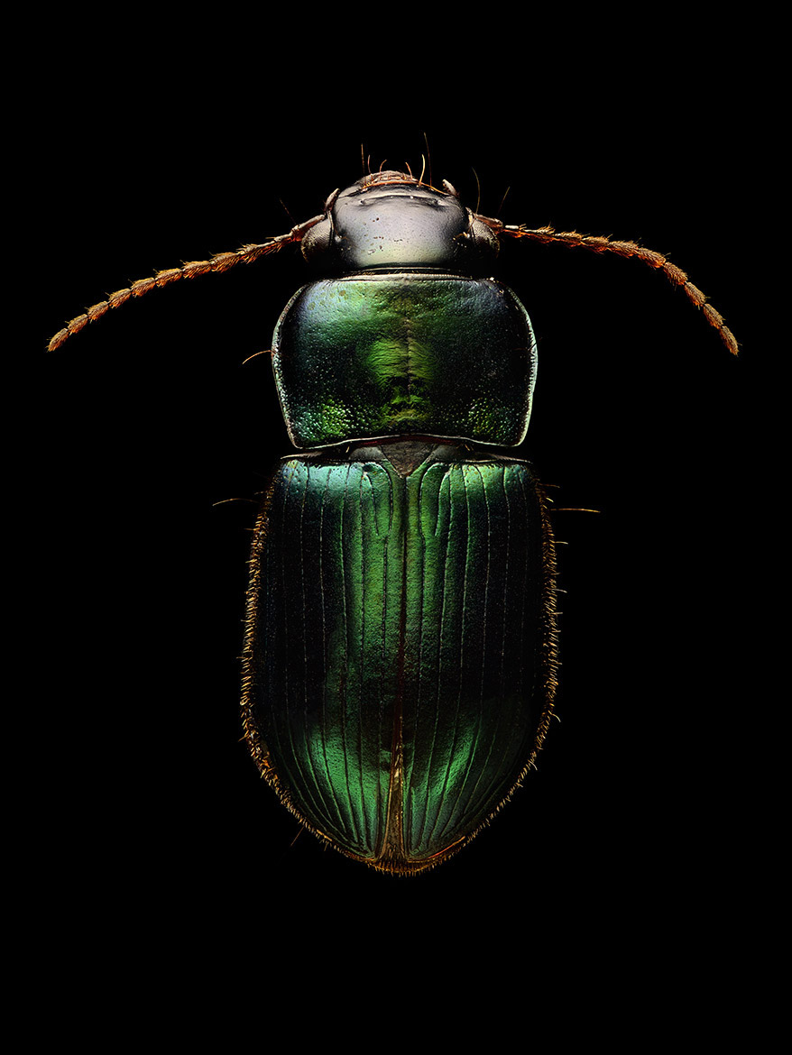 Microsculpture Stunning Macro Photographs Of Colorful Insects By Levon Biss 8