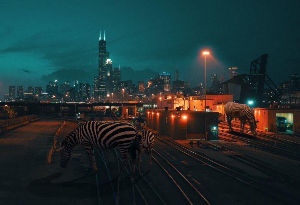 Cyberpunk Scenarios Of Wild Animals Roaming Around Nightly Cityscapes By Carlos Jimenez Varela 4