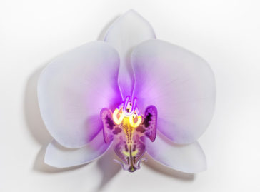 Delicate orchid glass sculptures with neon lights by Laura Hart