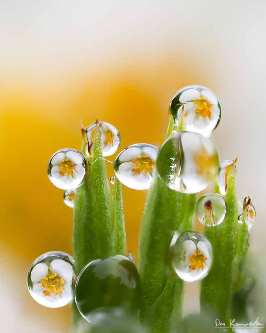 Hypnotizing Water Droplet Macro Photographs By Don Komarechka 10