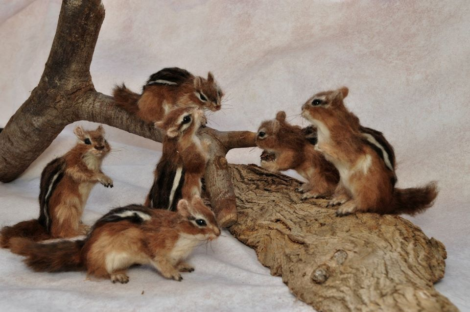 Needle Felted Animal Sculptures In Miniature By Daria Lvovsky 8