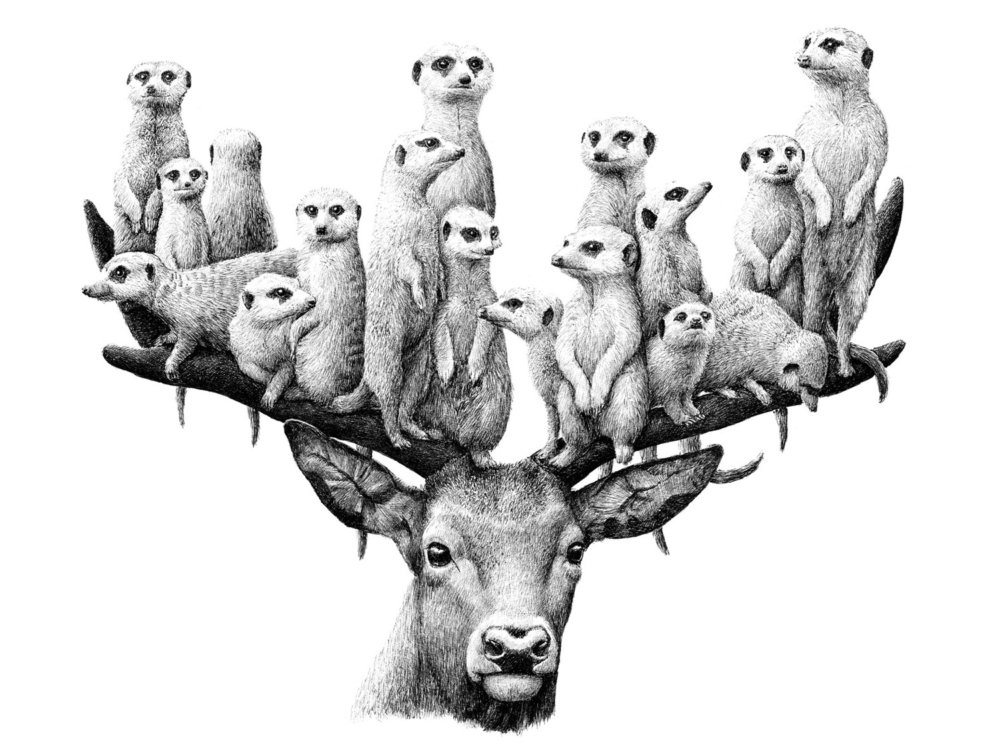 Surreal Black And White Animal Illustrations By Redmer Hoekstra 4