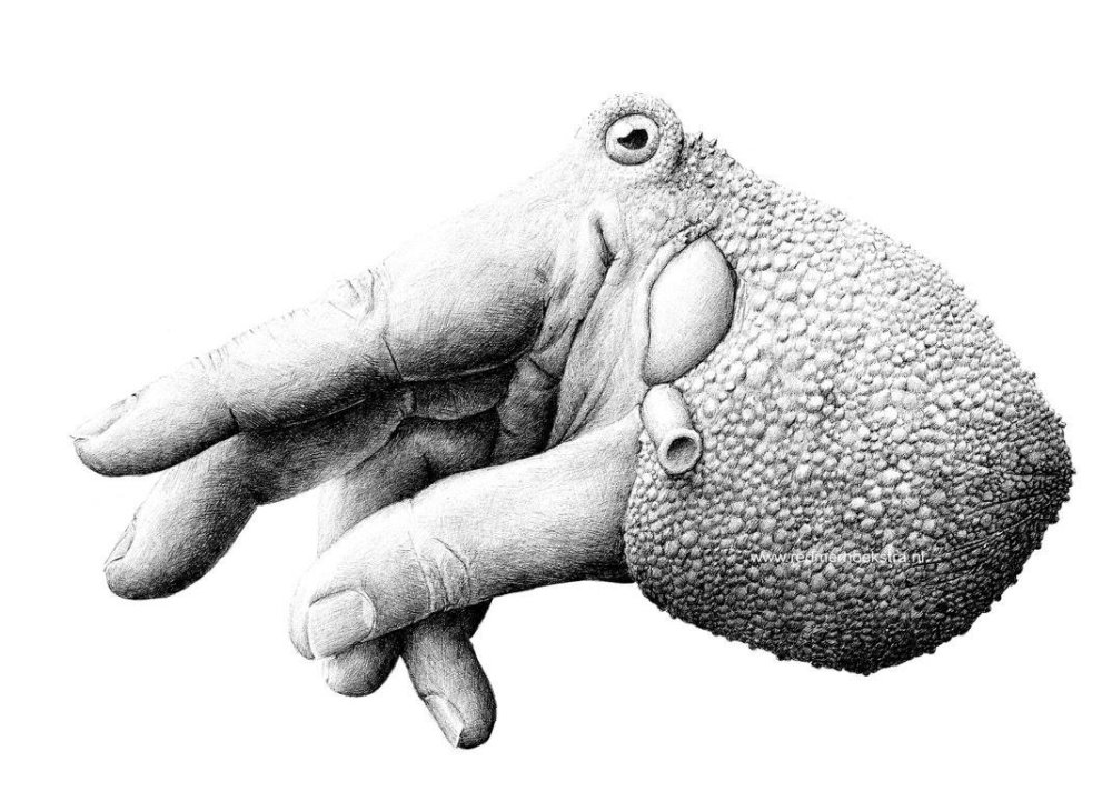 Surreal Black And White Animal Illustrations By Redmer Hoekstra 9