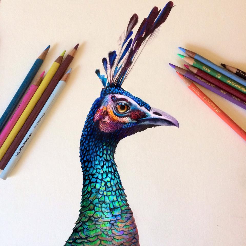 Vibrant Pencil Drawings By Morgan Davidson 5