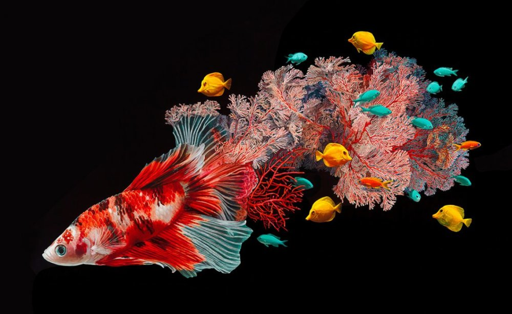 Fish And Coral Reefs Twisted Into The Lush Acrylic Paintings Of Lisa Ericson 1